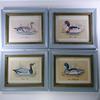 Lot de 4 tableaux sous verre série