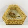 Petit cadre décoratif taxidermie scorpion sous verre